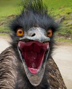 Das-emu